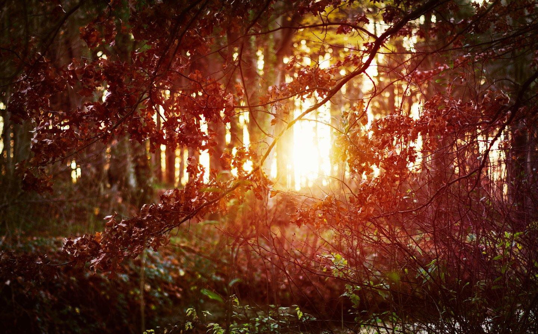 Wald im Gegenlicht der Sonne